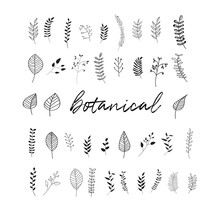 Vector Botanical Doodles Illus...
