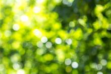 Blurred Green Tree Leaf Background With Bokeh, Nature Texture