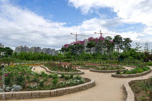 pureun arboreteum rose garden Poster