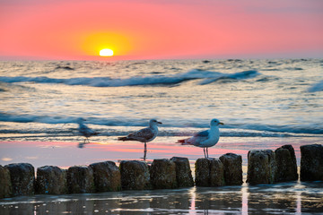 Fototapeta Wschód / zachód słońca Sunset on the beach with seagulls sitting on the breakwater