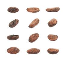 Single Cocoa Bean Isolated