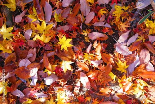 Deurstickers Rood traf. 秋の登山道の風景14