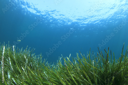 Photo Stands Ocean Green grass blue ocean underwater