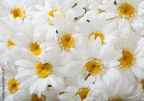 Foto op Canvas Madeliefjes bouquet of daisy flowers