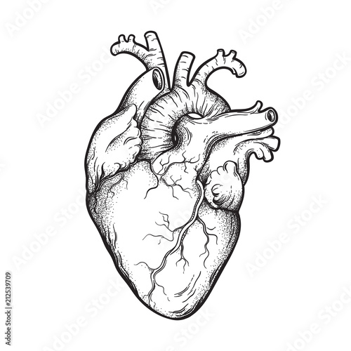 Human heart anatomically correct hand drawn line art and dotwork. Flash tattoo or print design vector illustration.