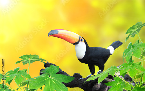 Tuinposter Toekan Horizontal banner with beautiful colorful toucan bird