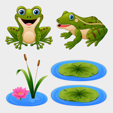 Set Of Cartoon Frog And Water ...