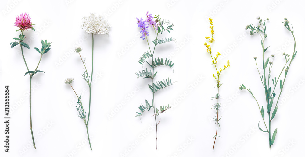 Fototapety, obrazy: Set of wild flowers, flowering grass, natural field plants, color floral elements, beautiful decorative floral composition isolated on white background, macro, flat lay, top view.