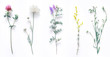 Leinwandbild Motiv Set of wild flowers, flowering grass, natural field plants, color floral elements, beautiful decorative floral composition isolated on white background, macro, flat lay, top view.