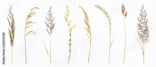 Fotografía Set of wild ripe herbs grass and twigs, natural field plants, color floral elements, beautiful decorative floral composition isolated on white background, macro, flat lay, top view