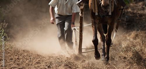 Farmer and horse plowing farmer field,guided by an elderly farmer while ploughin Canvas Print
