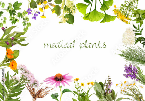 Fototapeta Frame with medical plants obraz