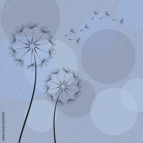 dandelion-z-latajacymi-ziarnami