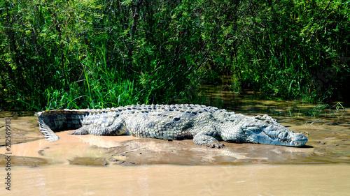In de dag Krokodil The Nile crocodile in Chamo lake, Nechisar national park, Ethiopia