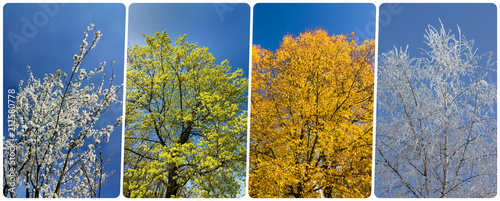 Fotografía Four season collage from vertical banners with trees and blue sky