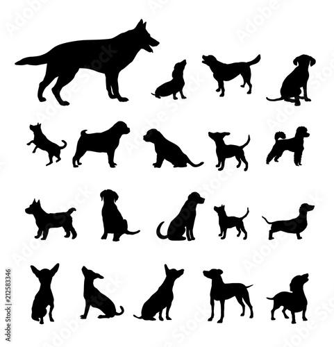 Hunde - 12 Wall mural