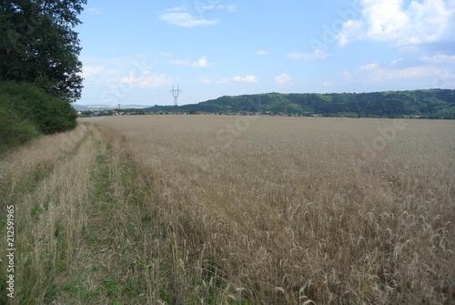 Deurstickers Grijs wheat field