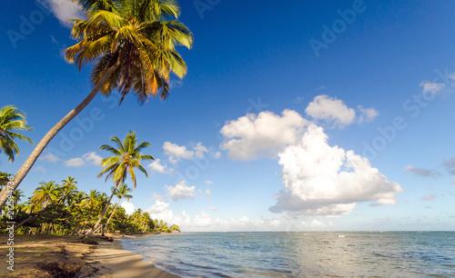Foto op Aluminium Centraal-Amerika Landen Ferien, Tourismus, Sommer, Sonne, Strand, Auszeit, Meer, Glück, Entspannung, Meditation, Palmen, Mangroven: Traumurlaub an einem einsamen, karibischen Strand :)