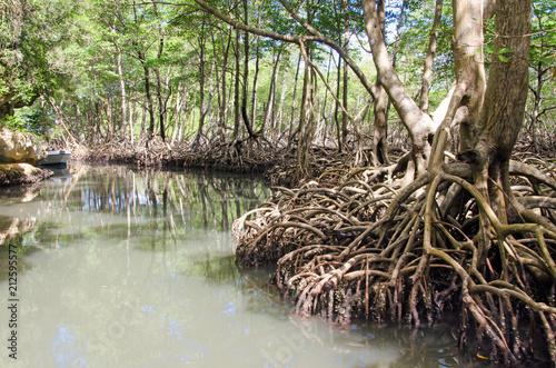 Foto op Aluminium Centraal-Amerika Landen Mangroves in the Caribbean on Samana :)