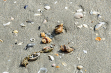 Colored Sea Shells In The Gold...