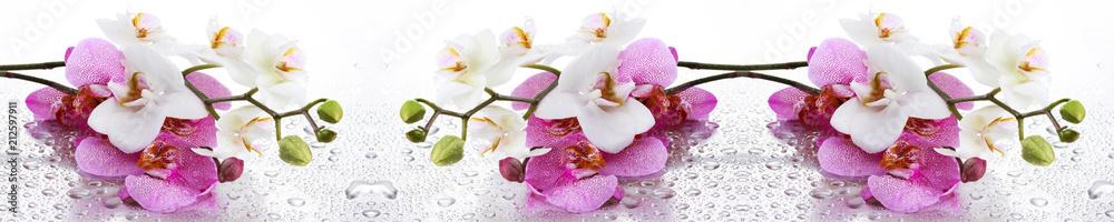 Fototapety, obrazy: Beyaz ve Pembe Orkide Panoramik