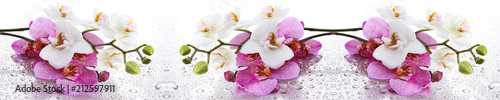Foto op Aluminium Bloemenwinkel Beyaz ve Pembe Orkide Panoramik