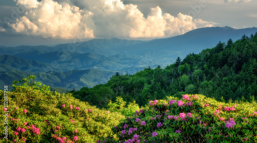Roan Mountain Carvers Gap rhododendron blooming Canvas Print