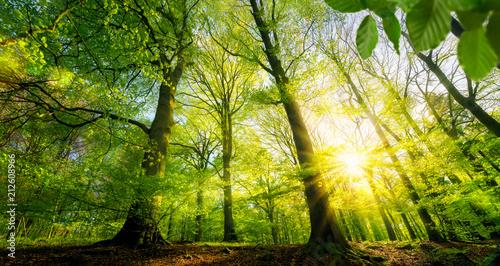 Foto op Canvas Pistache Sonne scheint durch grüne Laubbäume im Wald
