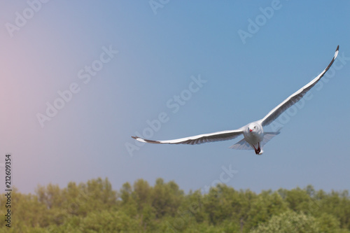 Seagulls flying among blue sky. Poster