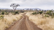 canvas print picture - Gravel road S114 in Afsaal area in Kruger National park, South Africa