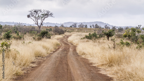 Foto op Plexiglas Zuid Afrika Gravel road S114 in Afsaal area in Kruger National park, South Africa