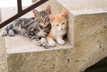 Two Kittens On Stairs At Home