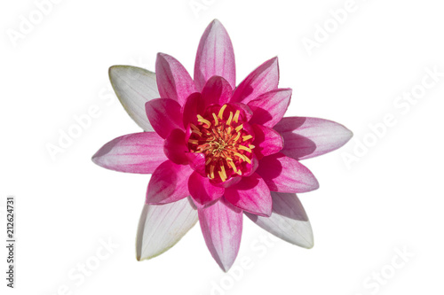 Deurstickers Waterlelies Seerose isoliert auf weiss - Lotus Blume