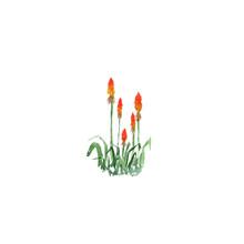 Botanical Watercolor Illustrat...