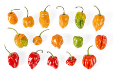 Very Hot Habanero Chilies From Mexico Colorful Peppers Found In Yucatan, Mexico