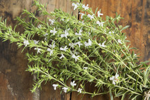 Summer Savory , Satureja Hortensis, Bunch