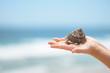 Child hands holding seashell