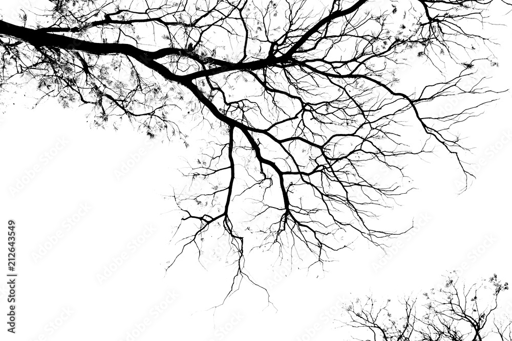 Fototapeta Bare tree branches on a pale white background