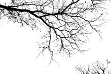 Bare Tree Branches On A Pale W...
