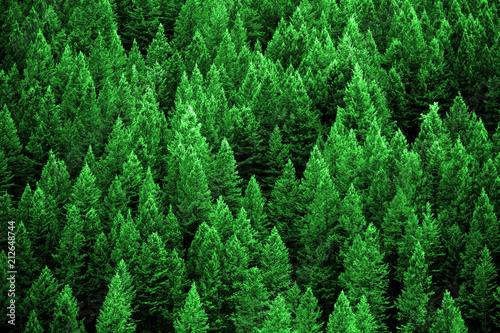 Fotobehang Bos Pine Forest in Wilderness Mountains