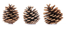 Pine Cones Isolated On White B...