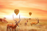 Fototapeta Sawanna - Group of african antelopes in the African savanna against a beautiful sunset and air balloons.  African fantastic landscape. Flight over the African savannah in the Serengeti National Park.