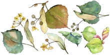Linden Leaves In A Watercolor Style Isolated. Aquarelle Leaf For Background, Texture, Wrapper Pattern, Frame Or Border.