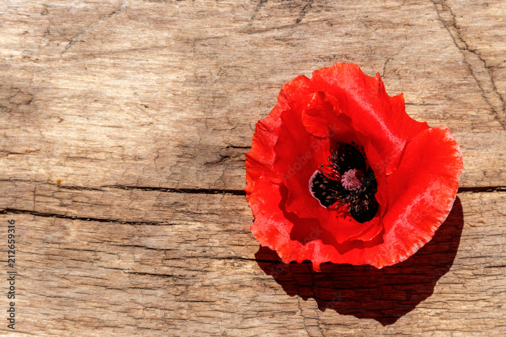 Red poppy flower on wooden background. Top view, copy space