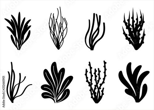 Photo algae icon set. Marine plants isolated