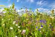 Leinwandbild Motiv Sommerfeld mit bunten Blumen