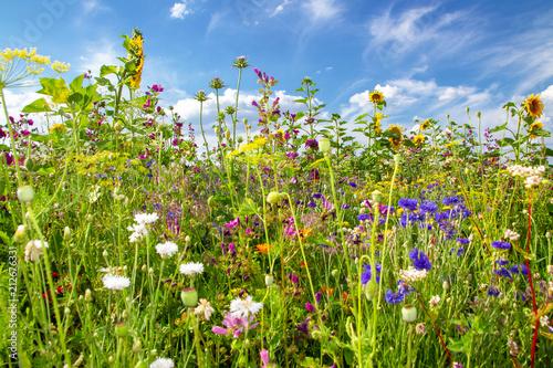 Poster Natuur Sommerfeld mit bunten Blumen