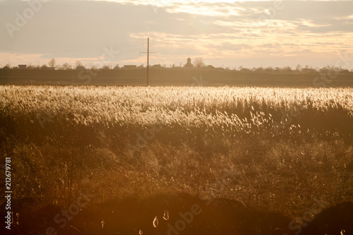 Poster Beige Autumn landscape with reeds in contrejour light at sunset
