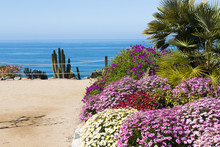 Flowers, Palm Trees, And Cactus Plants Alongside A Walking Trail Overlooking The Ocean In San Diego, California.