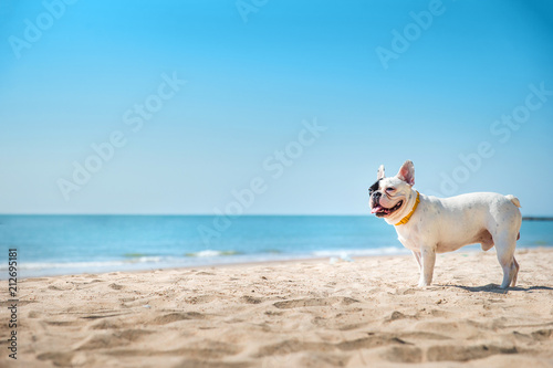 Cadres-photo bureau Bouledogue français Portrait of french bulldog on the beach
